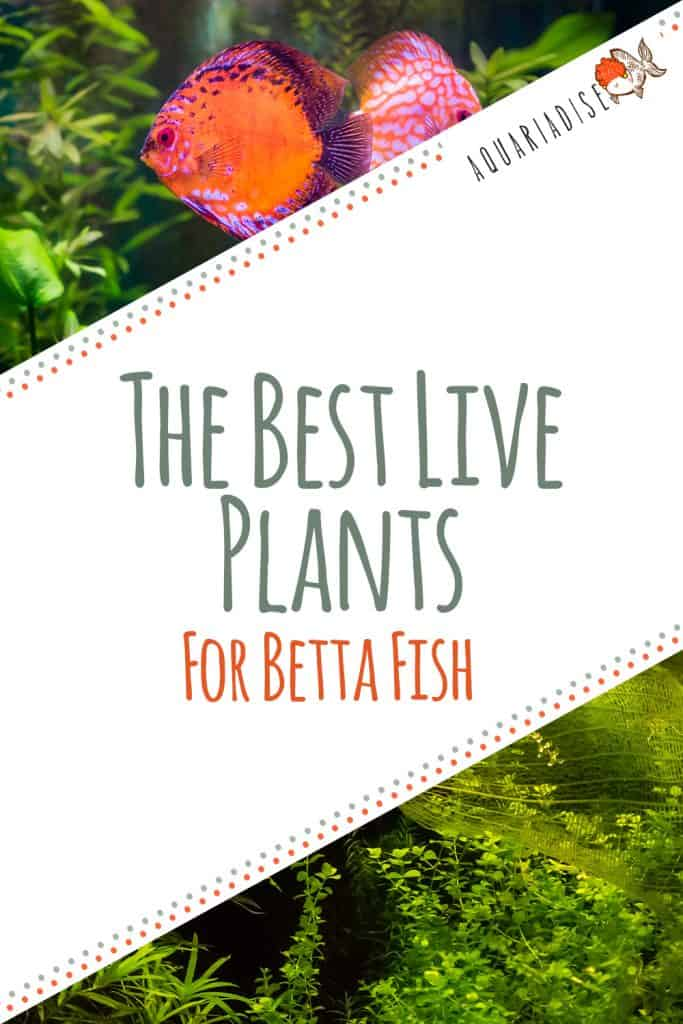 Live Plants For Betta Fish