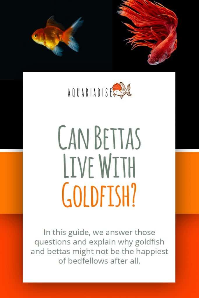 Betta Fish And Goldfish