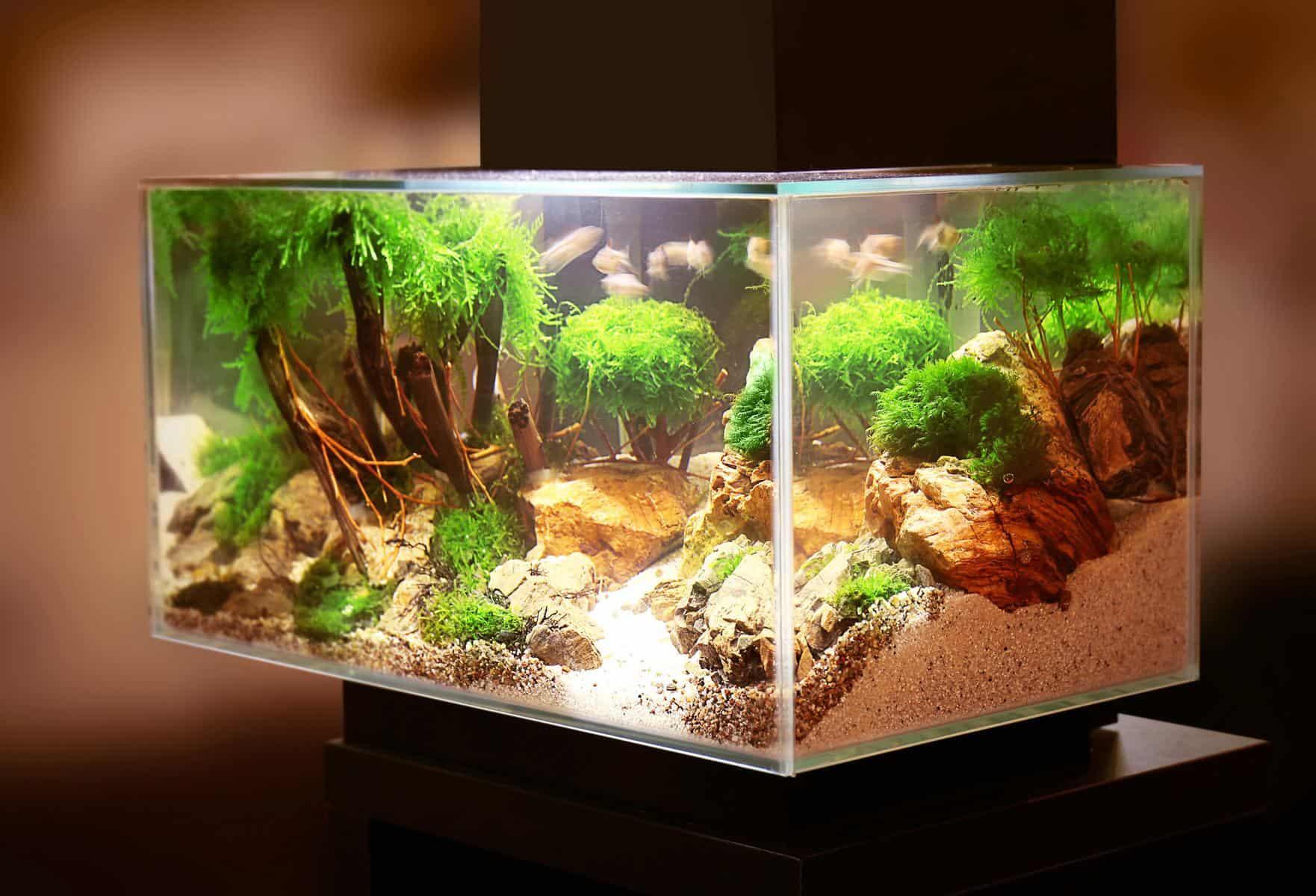 Aquarium With Fluval Edge