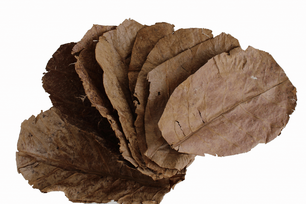 almond leaves for betta