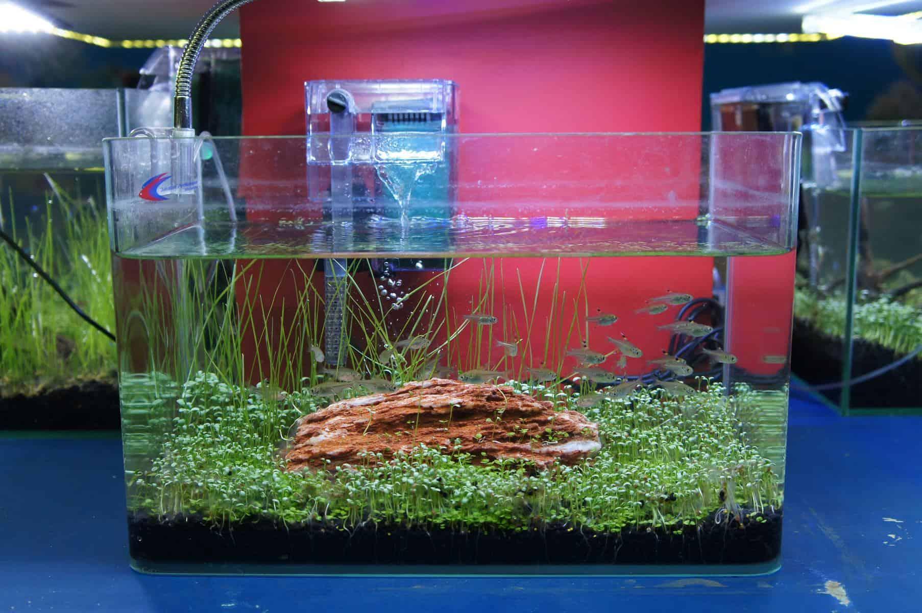 Filter Baffle In Aquarium
