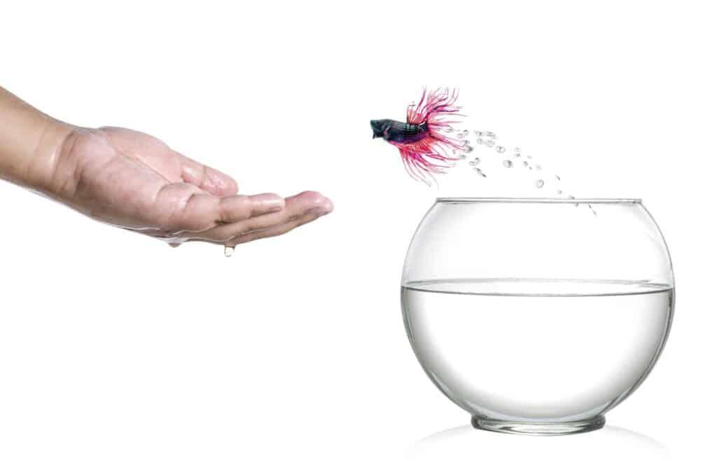 How Smart Are Betta Fish