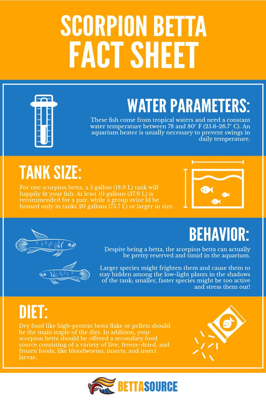 Scorpion Betta Fact Sheet