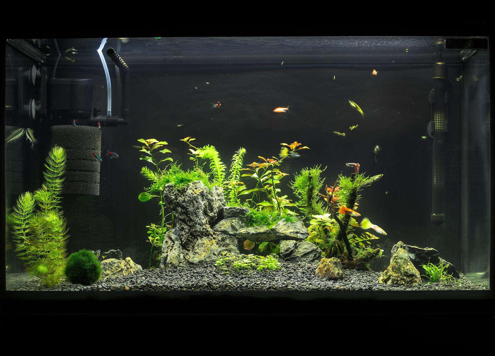 aquarium filter with fish