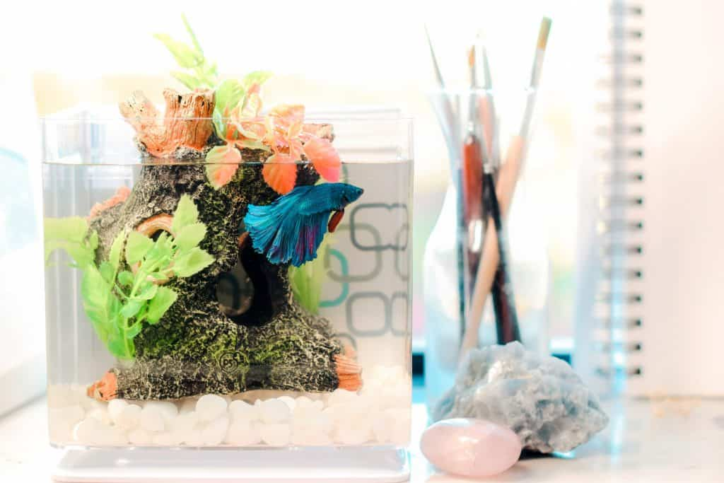 betta fish caves
