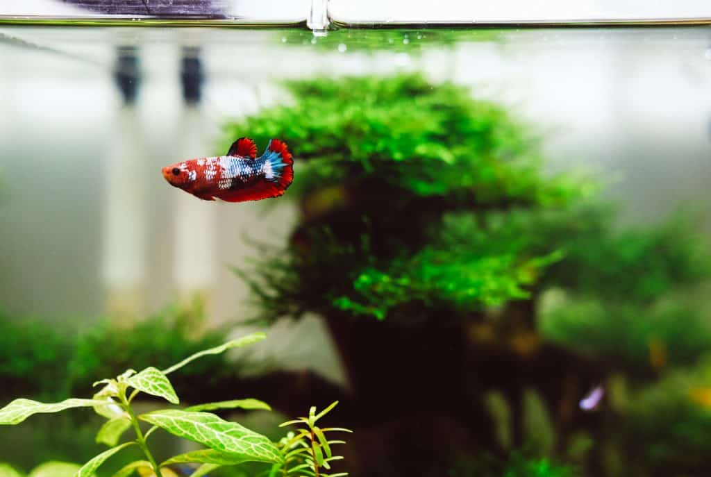 The Most Entertaining Toys For Your Betta Fish